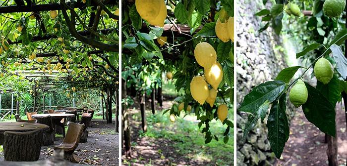 Lemon tour