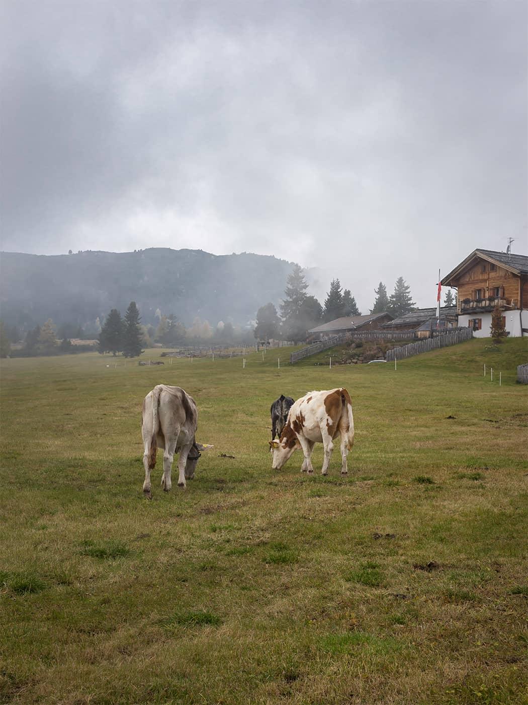 i pascoli dell'Alto Adige